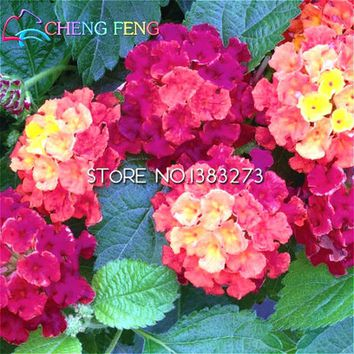 New Flowers 30 Pcs/ Bag Lantana Seeds Flower Seed Potted Home Garden Biennial Ornamental Bonsai Flores Kids Gift Free Shipping