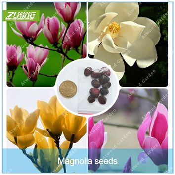 ZLKING Rare 10 pcs Dark Red White Yulan Magnolia Flower Seeds For Home Garden DIY Ornamental-plant Bonsai