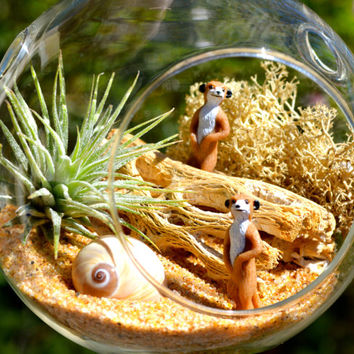 Meerkat Terrarium Kit ~ Small Glass Hanging Terrarium with Air Plant ~ 2 Meerkat ~ Cactus Rib ~ Lichen Moss ~ Gift Idea ~ For Him ~ For Her