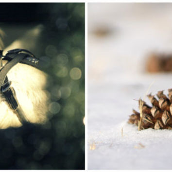 Holiday Greeting Card Set | Christmas Card Set of 2 | Horse Photography | Snowy Pine Cone | Nature Photography | Eco-Friendly Cards