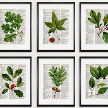 FLOWERS Dictionary Art Print Set, Botanical Print set, pressed flower art, flower Print, Vintage Botanical Wall Decor, Set Prints, #199