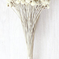 "Preserved Mini Billy Button Bundle - Craspedia in Natural3 oz Bunch16"" Tall x .25""-.5"" Bloom Diameters"