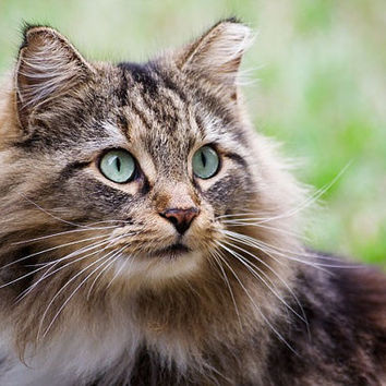Pet Past Life Reading- Have You Known Your Pet Before?