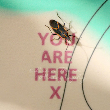 Insect Photography, Nature, Nature Photography, Starved Rock, Green, Black, Red, Orange, Stink Bug, Map, You are Here