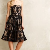 Delancey Lace Dress by Rachel Antonoff Black