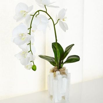 John-Richard Collection Selenite Orchid Faux Floral Arrangement