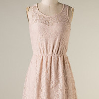 Lace Skater Dress - Champagne - Hazel & Olive