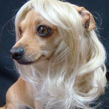 Long Hair Dog Wig - Blonde or Pink