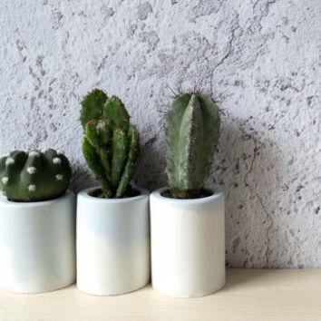 Set Of Three Blue Topped Concrete Planters With Cactus