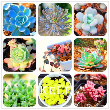 Big Promotion!99 Kinds Rare Succulents Seeds Lithops Seeds Pseudotruncatella Office Bonsai Plants Flower Seed 100 PCS/Lot,#UJY3G