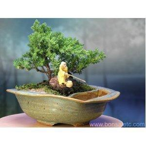Yoga & Zen Reflection Bonsai - Juniper Bonsai Tree by the Pond