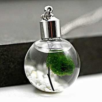 Living Locket - Water Necklace with pebble stones, wood and living Marimo moss.