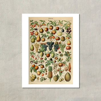 Fruits Pour Tous (Fruits For Everyone) Botanical Print, 1907 - 8.5x11 Reproduction Dictionary Color Plate - also available in 11x14 13x19