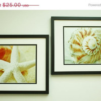 ON SALE Wall Decor Set of 2 Shell Photos, Pink, Tan, White, 8x10 Prints, Unique Art, Shabby Chic, Affordable Beach Decor