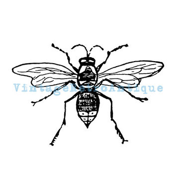 Digital Printable Bee Graphic Insect Download Illustration Image Vintage Clip Art 18x18 HQ 300dpi No.3526