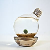 Aqua Terrarium: Marimo Moss Ball Light Bulb Aquarium - Repurposed Lightbulb Living Art