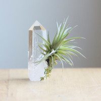 Air Plant, on Quartz Rock Crystal Point, Living Home Decor
