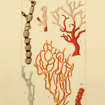 Shop vintage sea coral prints on wanelo for Vintage ocean decor