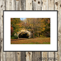 Fallen in Prospect Park - Brooklyn - 8x12 Fine Art Print - Photography