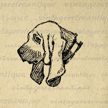 Printable Graphic English Bloodhound Dog Image Illustration Digital Download Vintage Clip Art for Transfers etc HQ 300dpi No.3177