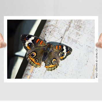 Moth Photography/ OPEN EDITION prints / Moth photography and Moth art / Black, orange, red, white