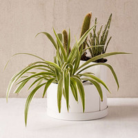 "Mod 7"" Double Planter - Urban Outfitters"