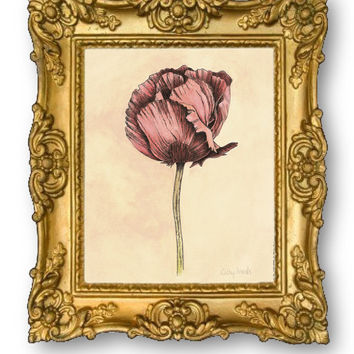 Red Poppy Botanical Print - Vintage Look Flower Giclee 8x10