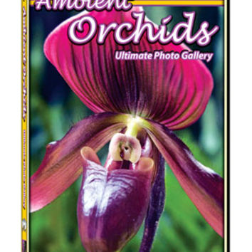 Ambient Orchids DVD: Ultimate Photo Gallery