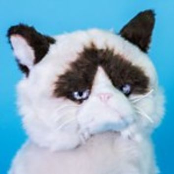 Grumpy Cat | Firebox.com - Shop for the Unusual