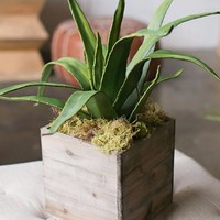 """Faux Agave Plant in Green - 9"""" Wide"""