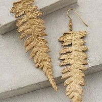 Midas Fern Earrings by Alkemie Gold One Size Earrings