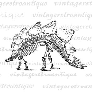 Stegosaurus Dinosaur Skeleton Digital Image Download Printable Graphic Vintage Clip Art Jpg Png Eps  HQ No.2739