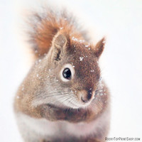 Red Squirrel Woodland Animal Photography by RockyTopPrintShop