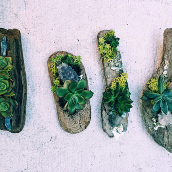 Unique Small Driftwood Succulent Art
