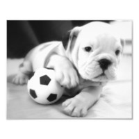 Let's Play Soccer!  English Bulldog Puppy Art Photo from Zazzle.com