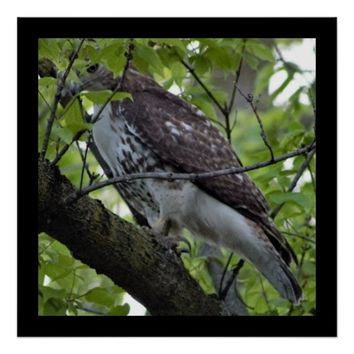 Hawk in a Tree Poster