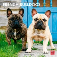 French Bulldogs 2013 Square 12X12 Wall Calendar (Multilingual Edition)