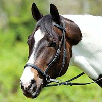 Dr Cook's Beta Bitless Bridle
