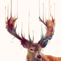 Red Deer // Stag Canvas Print by Amy Hamilton