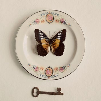 Still Life Butterfly Photograph, Vintage Cream Colors, Real Butterfly Specimen, Skeleton Key, Photo, Brown Wings, Antique, Beige, Faded