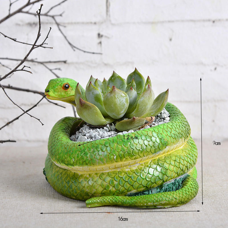 Small Snake Cactus Succulent Planter Pot From Happy365days Must