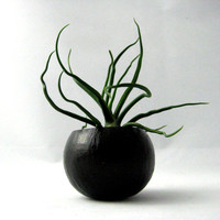 Single Bulbosa Air Plant Container Pod - Black // Home and Garden // Planter // Gifts under 20