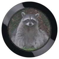 Forest Raccoon Photo USB Charging Station