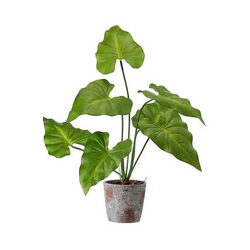 Tropical Natural Touch Taro Leaf Plant in Pot - 21""