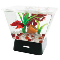 Tetra® LED Betta Tank with Base Lighting - Fish - Sale - PetSmart
