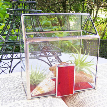 The RED Door Miniature House Terrarium with Tillandsia Air Plants and Sea Shells (ready to ship)