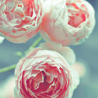 Pastel Roses Print pink and teal Baby Girl Nursery Decor Summer flowers blue green Nature Photography