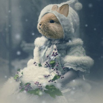 Bonnie - Vintage Bunny 5x7 Print - Anthropomorphic - Altered Photo - Snow - Christmas Photo - Winter Photo - Altered Photo - Blue