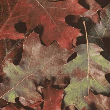Autumn Changing Leafs Backdrop - 7177
