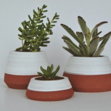 terracotta succulent planter indoor garden planters pots white planter home decor plants and pots cactus pot